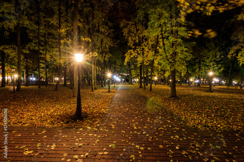 Foto op Canvas Herfst Night park in autumn with fallen yellow leaves.