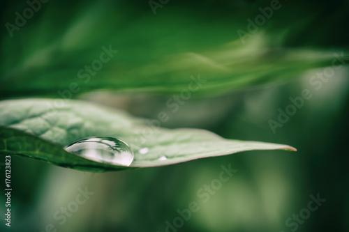 Goccia su foglia con sfondo verde