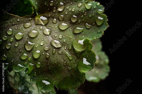 Macro di foglia verde con gocce