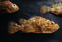 Scorpion Fish Still Life.