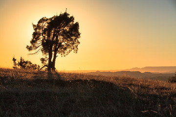 A tree silhouettes the setting sun in Theodore Roosevelt National Park, North Dakota