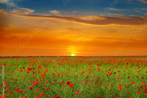 Field with poppies and sunrise - 176142808