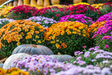 A large black pumpkin on a background of yellow, red and purple flowers - chrysanthemums. Colorful autumn in Moscow city, Russia.