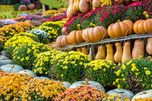 A Composition Of Pumpkins Lined Up In Rows, Against A Background Of Yellow And Red Flowers. Colorful Autumn In Moscow City, Russia.