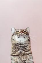 Beautiful Cat Looking Up