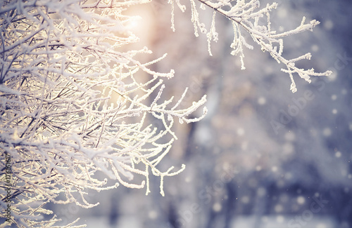 Fotografia  Branches in hoarfrost and snow in the winter