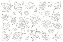 Autumn Leaves Vector Drawing.