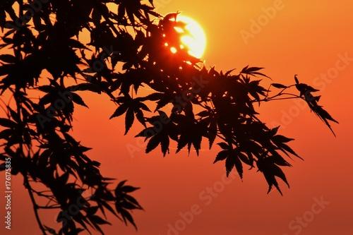 Papiers peints Orange eclat 日の出