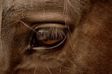 Eye Of Blackhorse