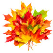 Autumn composition with yellow maple leaves bunch isolated on white background. Beautiful Autumn concept Card with copy space.
