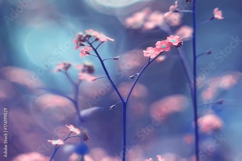 Foto auf AluDibond Blumen Wild flowers magic picture toning nature