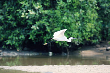 Flying Bird Heron Animal Backg...