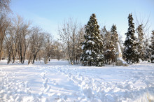 Snow-covered Trees, Stones, Fences And Benches In The City Park