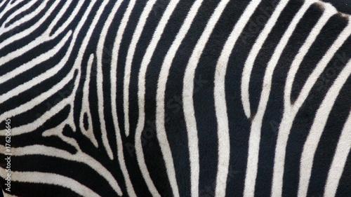 Aluminium Prints Zebra Zebra skin texture