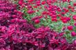 Beautiful flowers in park flowerbed