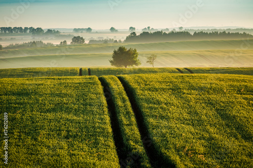 Staande foto Platteland Stunning sunrise at foggy field in summer
