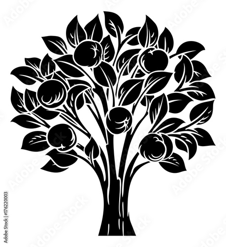 ozdobne-drzewo-jablon