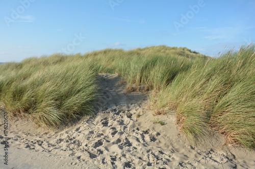 Spoed Foto op Canvas Noordzee Sanddünen und Strandhafer an der Nordseeküste in den Niederlanden auf der Insel Schouwen-Duiveland