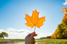 Maple Leaf In Hand Against Sky Background