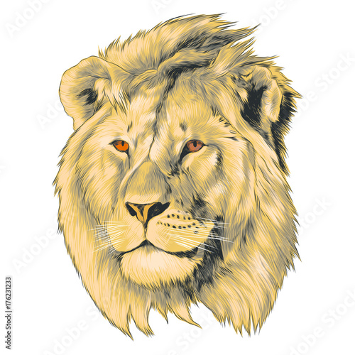 Fototapety, obrazy: sketch of lion head vector graphics color picture