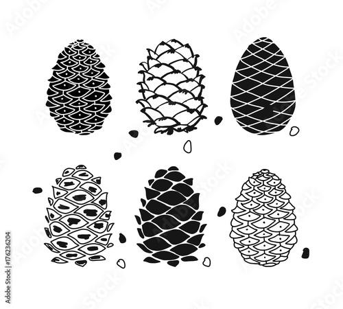 Fotografía  Cedar cone set, sketch for your design