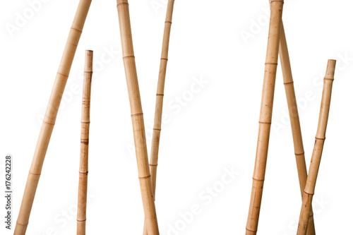 bamboo stems isolated on white