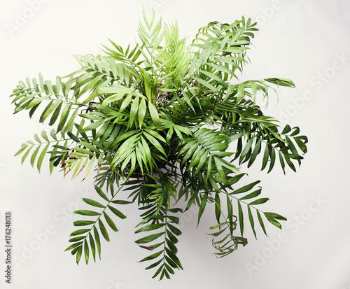 Garden Poster Plant Büro Pflanze von oben auf weiß