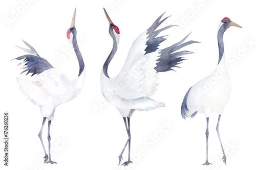 Photo  Watercolor set of cranes. Hand drawn illustration