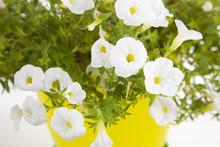 Garden Flower Pot With White P...
