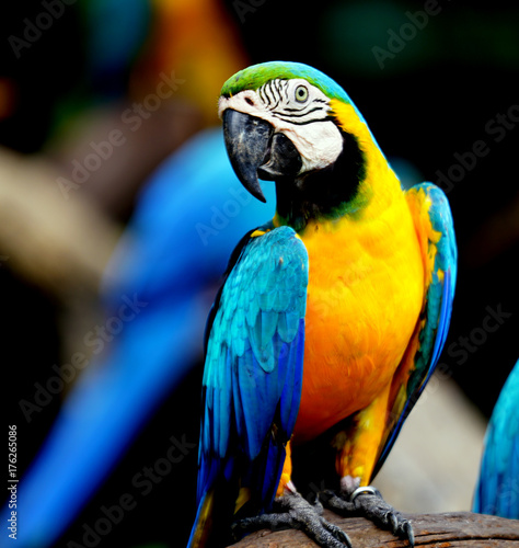 Foto op Canvas Papegaai Beautiful parrot