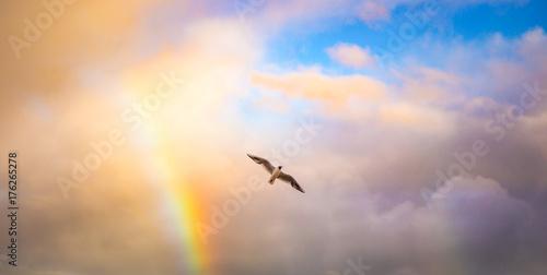 Vogel in den Wolken mit Regenbogen Wallpaper Mural