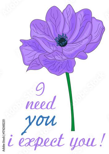 Fiori In Inglese.Anemone Fiore Significato Inglese Buy This Stock Illustration