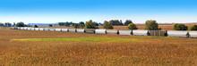Railroad Cars Transport Corn T...
