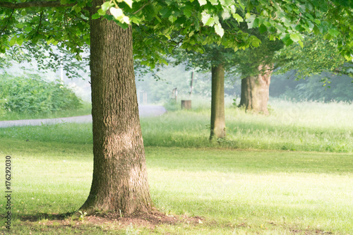 Canvas Prints Roe Morning in park