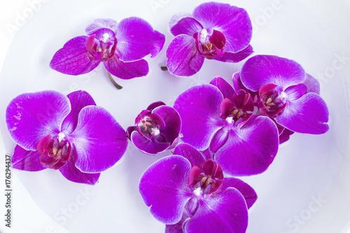 Zdjęcie XXL Różowa orchidea