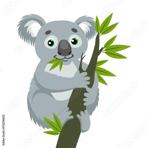 Fototapeta premium Miś Koala Na Gałęzi Drewna Z Zielonymi Liśćmi. Australijskie zwierzę najzabawniejsza koala siedząca na gałęzi eukaliptusa. Ilustracja kreskówka wektor. Kultowe torbacze.