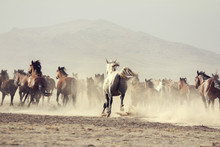 Plain With Beautiful Horses In...