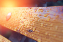 Wooden Bench With Drops After ...