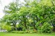 Park green trees