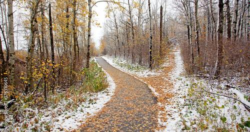Fotografie, Obraz  off the beaten path
