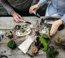 Couple Making A Terrarium With...