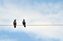Twin Bird On Electric Cable Under White Cloud And Blue Sky