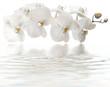 orchidée blanche, reflets remous de spa, massage, fond blanc