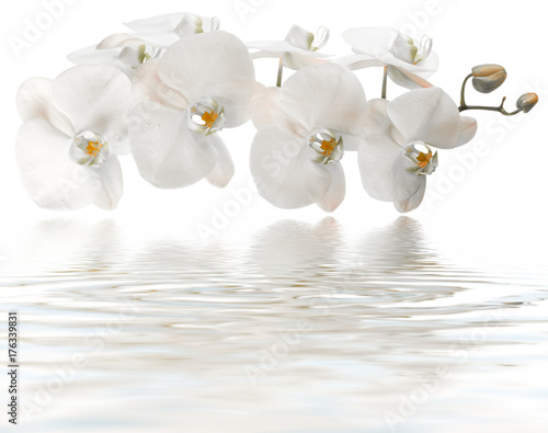 Fototapeta orchidée blanche, reflets remous de spa, massage, fond blanc  obraz