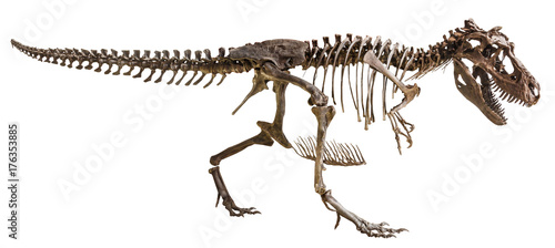 Photo  Tyrannosaurus Rex skeleton on isolated background