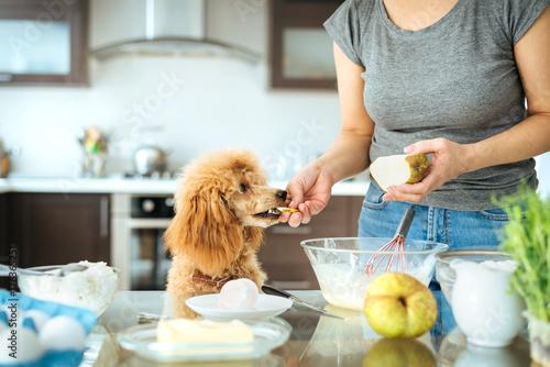 Plakat Młoda kobieta z jej psem gotuje na kuchni. Pojęcie gotowania.