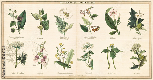 Leinwand Poster  Vintage style illustration of a set of plants used to create narcotic poisons