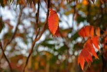 Przyroda W Jesiennych Barwach,...