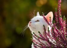Portrait Of Cute White Cat In ...