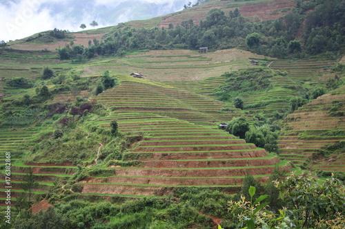 Foto op Canvas Pistache Rice terrace